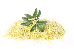 Sweet osmanthus flower royalty free stock photography