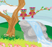 Sweet owls in spring scenery Stock Image