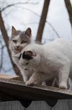 Sweet pair of cats on a roof Royalty Free Stock Images