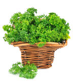 Sweet parsley Royalty Free Stock Photography