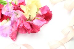 Sweet pea Royalty Free Stock Image