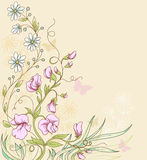 Sweet pea. Vector floral  background with sweet pea and butterflies Royalty Free Stock Images