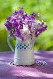 Sweet pea flower Royalty Free Stock Photo