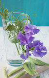 Sweet pea flowers Royalty Free Stock Image