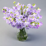 Sweet pea flowers in a glass vase. Stock Image