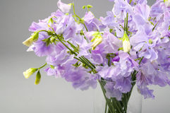 Sweet pea flowers in a glass vase. Royalty Free Stock Photos