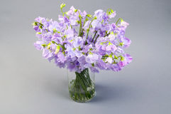 Sweet pea flowers in a glass vase. Royalty Free Stock Photo