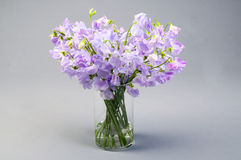 Sweet pea flowers in a glass vase. Royalty Free Stock Image