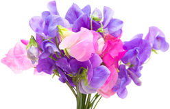 Sweet pea Royalty Free Stock Photography