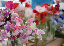 Sweet Pea flowers for sale at a farmers market Stock Images