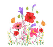 Sweet pea flowers, watercolor Stock Photos
