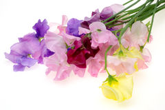 Sweet pea Stock Photos
