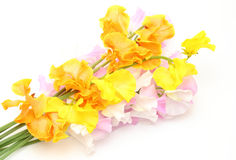 Sweet pea Stock Images