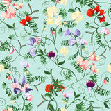 Sweet pea seamless. Decorative colorful seamless with sweet pea patterns Royalty Free Stock Image