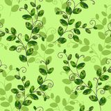 Sweet pea seamless pattern Stock Photography