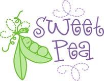 Sweet Pea Royalty Free Stock Photo