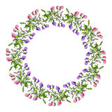 Sweet pea wreath. Sweet pea summer wreath with flowers. Vector illustration Royalty Free Stock Image