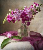 Sweet peas. Still life with pink sweet peas Stock Images