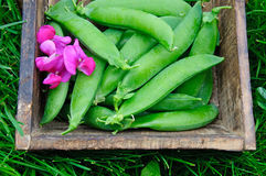 Sweet peas. Peas pod and flower on a wooden tray placed on grass Royalty Free Stock Photos
