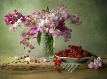 Sweet peas. Beautiful sweet peas with currants Stock Photos