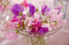 Sweet peas flower Stock Photography
