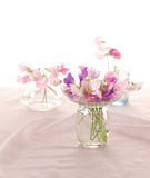 Sweet peas flower Stock Image