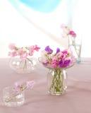 Sweet peas flower Royalty Free Stock Photos