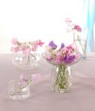 Sweet peas flower Stock Photography