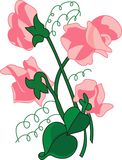 Sweet peas Royalty Free Stock Images