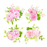 Sweet peonies bouquets vector design elements in shabby chic style. Royalty Free Stock Image