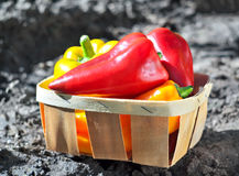 Sweet pepper in a basket in the garden. Freshly plucked sweet pepper in a basket in the garden. Outdoors. Autumn garden with sweet pepper. Vegetables basket in Stock Images