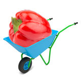 Sweet pepper in hand-barrow Royalty Free Stock Image