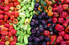 Sweet Pepper Rainbow. A rainbow of fresh sweet peppers at the farmers' market royalty free stock image