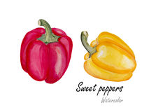 Sweet pepper red and yellow  .Hand drawn watercolor painting on white background.Vector illustration Royalty Free Stock Photos