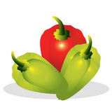 Sweet pepper vector illustration. Royalty Free Stock Photography