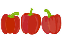 Sweet pepper vector Royalty Free Stock Photo