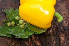 Sweet pepper yellow Stock Image