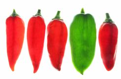 Sweet peppers (Capsicum annuum) Stock Photography