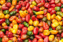 Sweet peppers. Colorful sweet peppers on a market in Peru, South America Royalty Free Stock Photography