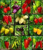 Sweet peppers set Stock Photography