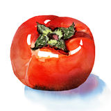 Sweet persimmon. Watercolor painting on white background Stock Photo