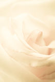 Sweet petal rose, in soft color and blur style Stock Photo