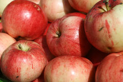 Sweet pink apples Royalty Free Stock Photo