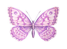 Sweet pink butterfly detailed painting. Isolated on white Stock Photos