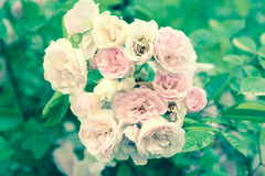 Sweet pink flower Royalty Free Stock Photography