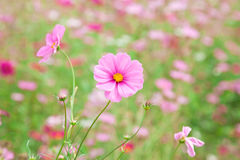 Sweet Pink flower Stock Photography