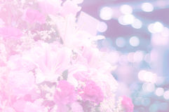 Sweet pink flowers in soft focus for background. Royalty Free Stock Photo