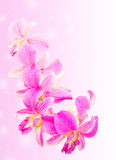 Sweet pink orchid flower isolated Stock Photos