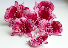 Sweet pink orchids for the cake closeup white background royalty free stock images