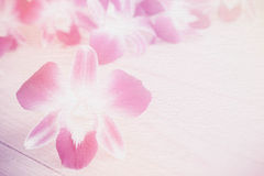 Sweet pink orchids on on cement textured filtered background. Stock Photo